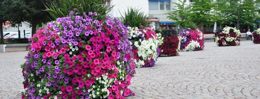 Blomsterkuber på torg