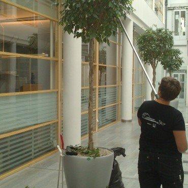 Skötselavtal för växtinredningar
