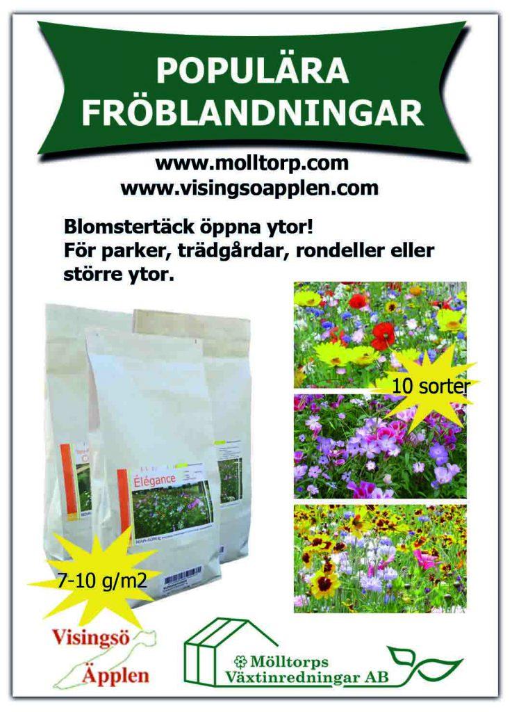 fröblandning, fröblandningar till rabatt, fröblandning till kommun, fröblandningar till kommuner, stora ytor, frö, frö och lök, blomsterfrö, blomster, blommor, blandningar, frön,