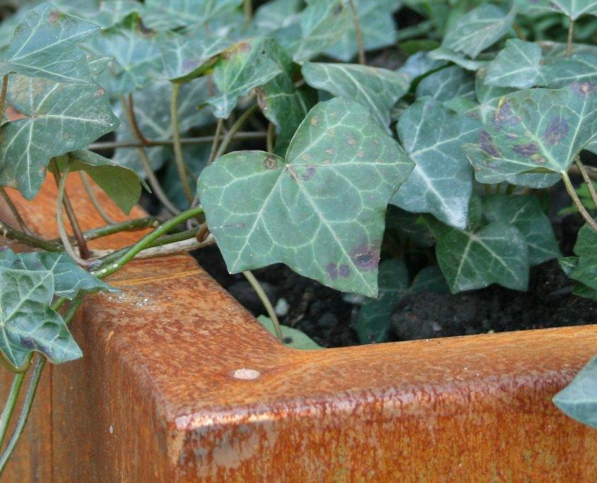 Närbild på kanten på en odlingsbädd