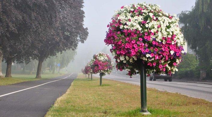 Topp utemiljö blomträd längs väg