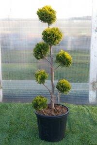 En högre modell av bonzaiträd. Trädet har sju bollar.